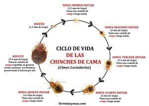 Ciclo de vida de las termitas