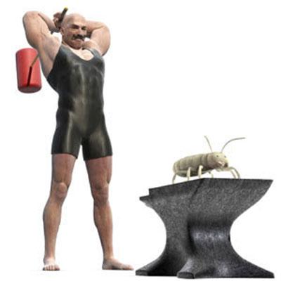 Cómo acabar con las termitas