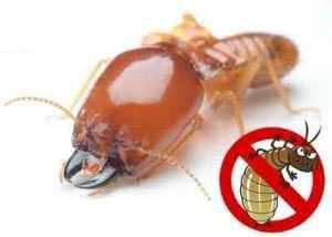 Cosas para eliminar termitas