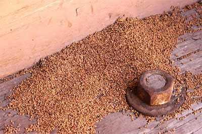 acabar con las termitas - Excremento de termitas
