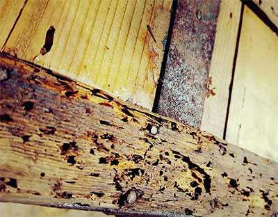 signos de termitas