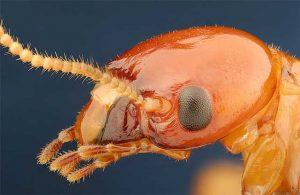 Imágenes de termitas