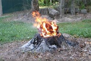 Como eliminar comejen de árboles