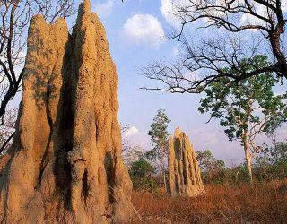 Montículo-de-termita