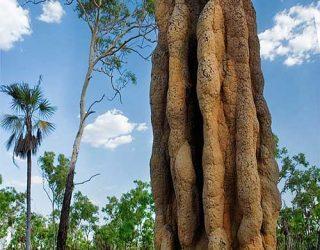 Montículo-de-termita_Termitero_