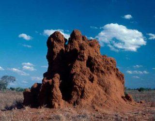Montículo_de_termita