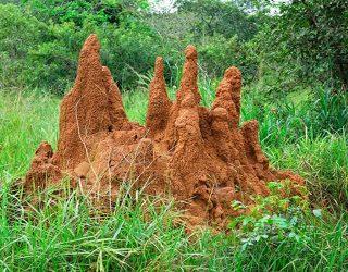 Montículos-de-termitas