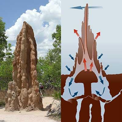 Montículo de termitas ventilación