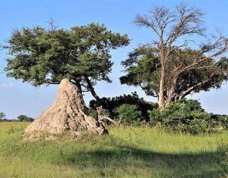 Termitero-Montículo-de-termitas