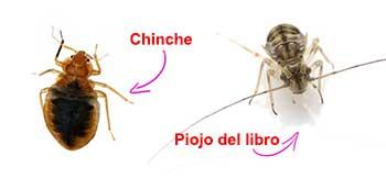 Hay Insectos que parecen chinches